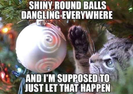 Pin By Lori Reynolds On Christmas Christmas Cat Memes Funny Cat Memes Christmas Memes