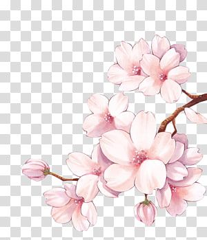 Paper Cherry Blossom Watercolor Painting Flower Cherry Blossom Transparent Background Png In 2020 Cherry Blossom Watercolor Cherry Blossom Painting Cherry Blossom Art