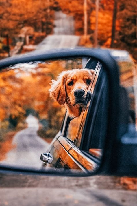 Autumn Cozy — By Kiel James Patrick Cute Puppies, Cute Dogs, Dogs And Puppies, Doggies, Fall Pictures, Dog Pictures, Fall Dog Photos, Autumn Photos, Fall Pics