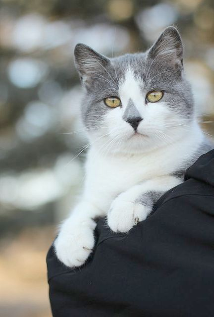 Astounding Beautiful Cats For Sale In Lahore Cats Pretty