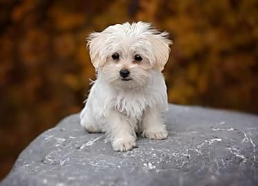 Baked Parmesan Zucchini Curly Fries Recipe Dog Breeds Maltese Dogs Small Dog Breeds