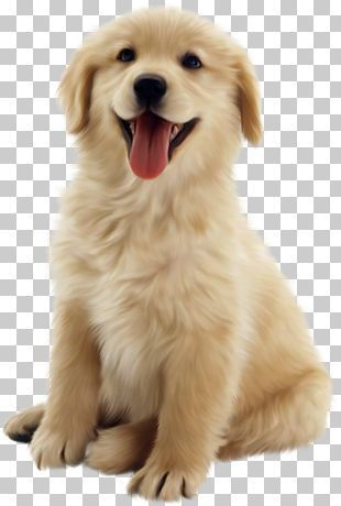 Puppy Png Images Puppy Clipart Free Download Cute Dogs Images Dog Background Dog Images Hd