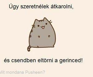 a farka egyenes)