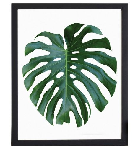 Nowoczesne Obrazy Nie Plakat 40x50 Duzy Wybor 6840209699 Oficjalne Archiwum Allegro Monstera Leaf Art Prints Art