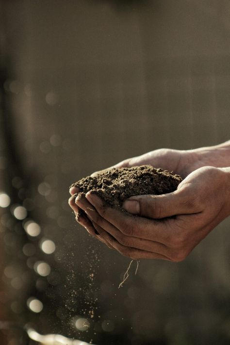 What is the Difference Between Organic And Biodynamic Farming?