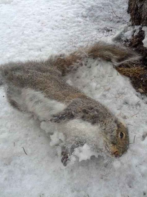 Image result for dead squirrel frozen on tree