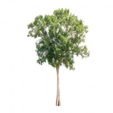 Tree Png Images Download 85000 Tree Png Resources With Transparent Background Tree Photoshop Garden Clipart Forest Garden