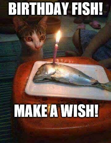 Happy Birthday Meme Fishing Happy Birthday Fun Fishing Birthday Happy Birthday Fishing
