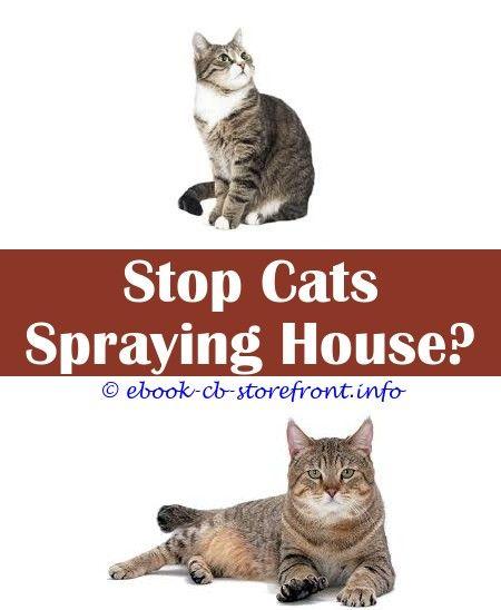 8 Glorious Ideas Cat Urine Deterrent Spray Gentamicin Sulfate