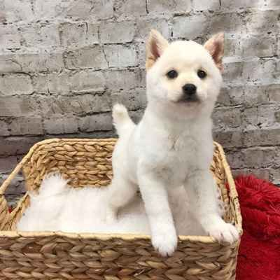 View All Pets For Sale Pets For Sale Pets Puppy Breeds