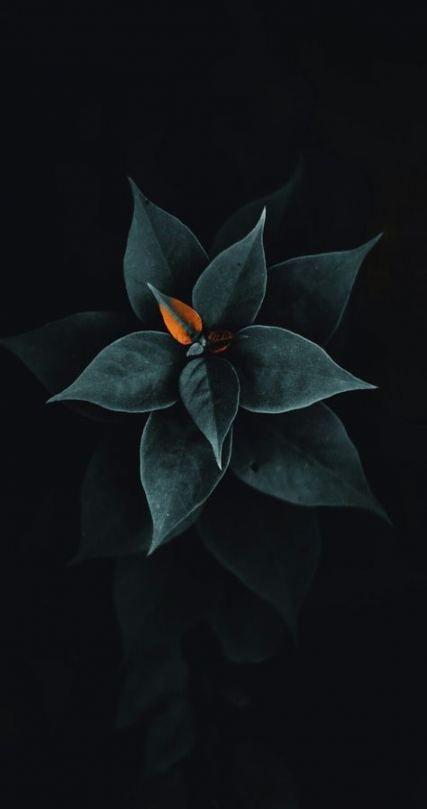25 Best Ideas For Flowers Black Background Photography Beauty Flowers Black Background Black Wallpaper Iphone Black Background Photography Portrait black abstract wallpaper 4k
