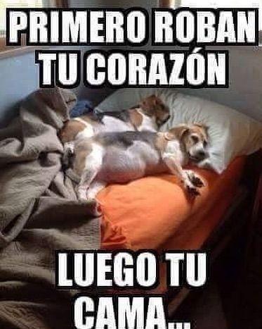 Imagenes De Memes En Espanol Http Www Fotosbonitaseincreibles Com Imagenes Memes Espanol 49 Humor Divertido Sobre Animales Animales Bonitos Humor De Perros