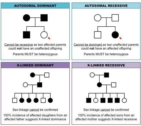 Pedigree Charts Inheritance Cheat Sheet Biology Lessons