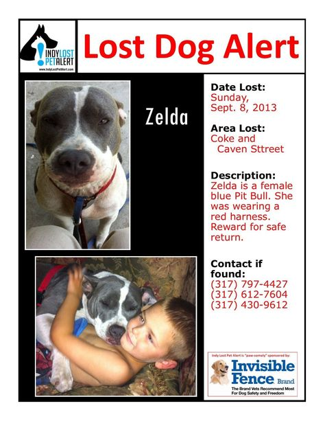 Indianapolis In Lostdog 9 8 13 Coke And Caven Street Female Blue Pitbull Bullterrier Wearing Red Harness Reward 317 797 442 Losing A Dog Pitbulls Blue Pits