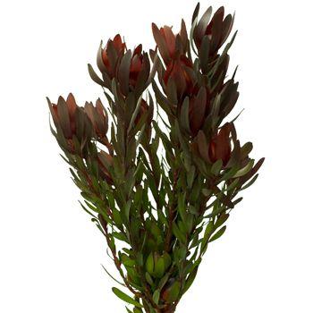 Flower Spotlight Protea Flowers Uk Wedding Flowers Flowers