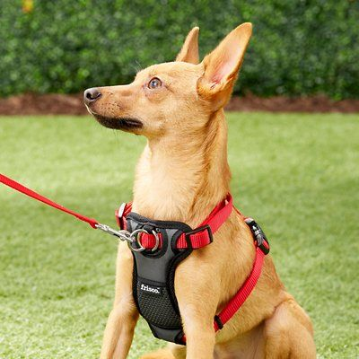 Frisco Padded No Pull Front Lead Dog Harness Red 16 22 In