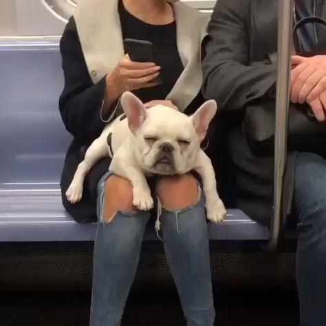 Too cute. Sleepy pup