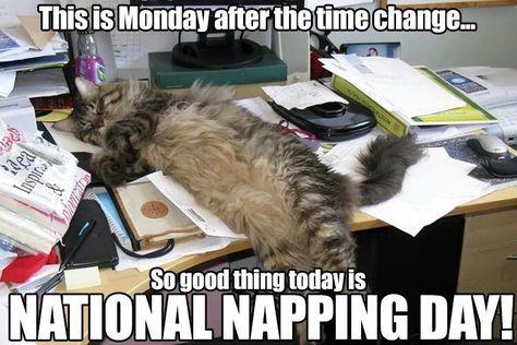 Beautiful lazy kitty celebrating National Napping Day!!  Especially