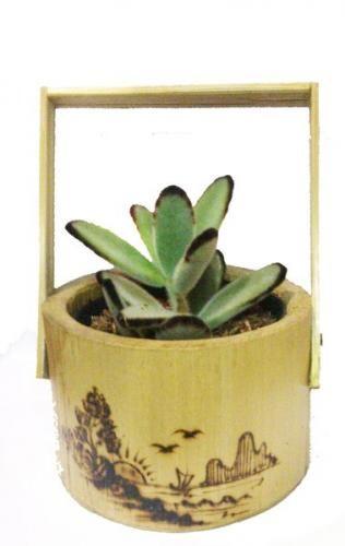Gambar Pot Bunga Gantung Dari Bambu Paket Kaktus Pot Bambu 8 Cm Bibit Tanaman Berkebun Hobi Jual Paket Pot Gantung Daun Bunga A Di 2020 Pot Bunga Bunga Pot Gantung