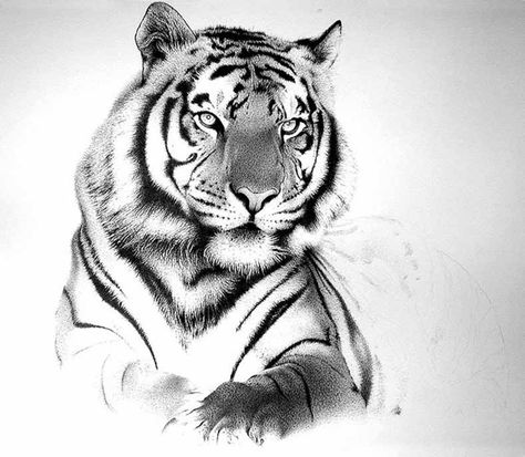 25 Powerful Tiger Tattoos For Men And Women White Tiger