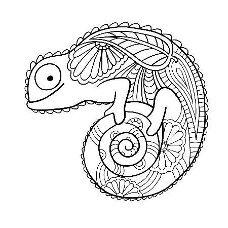 Pin Auf Chameleon Mandala