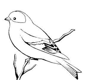 35 Desenhos De Pássaros Para Colorir Pintar Imprimir Ou