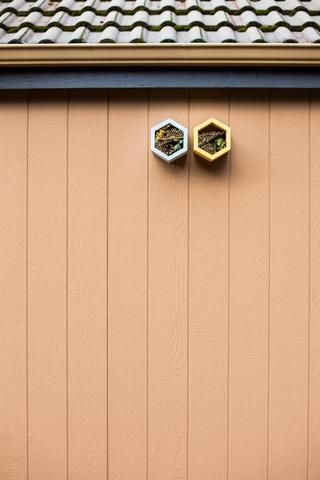 Everything You Need To Know Before Keeping Mason Bees Mason Bee House Mason Bees Bee Houses