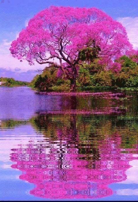 naturaleza impresionante, sol luna y más Pines populares en Pinterest -  gasparpinto67@gmail.com - Gmai… | Paisaje de fantasía, Hermosos paisajes,  Arboles de colores