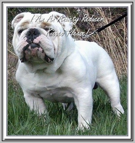 Common Problems Related To Dogs With Images Bulldog Breeds English Bulldog Dog Bulldog