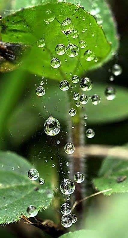 Pin By Julie Fenn On Natural Wonders Water Drop Photography Water Photography Water Art