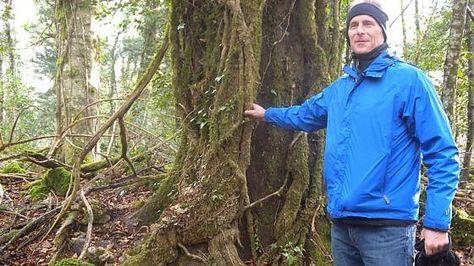 Lavoro Bari  Il professor Stefan Schnitzer dell'Università del Wisconsin-Milwaukee nel Parco nazionale del Gargano per un monitoraggio mondiale nell'ambito di uno studio...  #LavoroBari #offertelavoro #bari #Puglia Puglia la Foresta Umbra come la giungla di Tarzan: un esperto dagli Usa per studiare le liane del Gargano