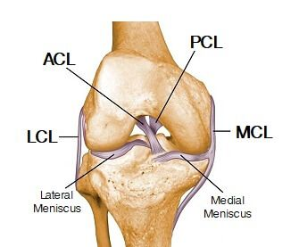 Knee Joint Anatomy Diagram Focusing On The Knee Ligaments Joints Anatomy Knee Joint Anatomy Knee Ligaments