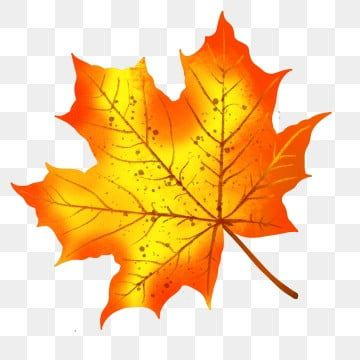Autumn And Winter Maple Leaves Hand Drawn Plant Simple Autumn And Winter Maple Leaf Autumn Leaves Png Transparent Clipart Image And Psd File For Free Downloa Original Watercolors Maple Leaf How