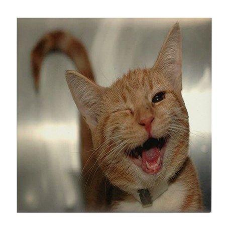 Catsandkittenshumor Ginger Cats Cats Funny Cats