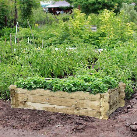 Siena Garden Hochbeet Tom Rechteckig 120x60x30cm Hochbeet Bepflanzung Pflanzen