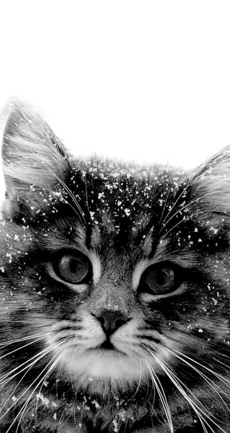 Chat et neige ...❤️
