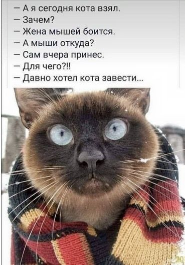 Pin By 4epuxinda 4epuxinda On Ha Ha Cats Cat Stories Animals