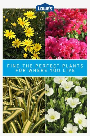 Find The Perfect Plants For Your Area In 2020 Flowers