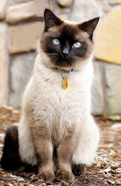 Luna 6434 Hi! My name is Luna! I'm a Cats Exclusive kitty