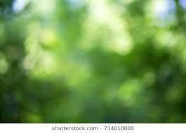 Image Result For Garden Blur Background Hd Blurred Background