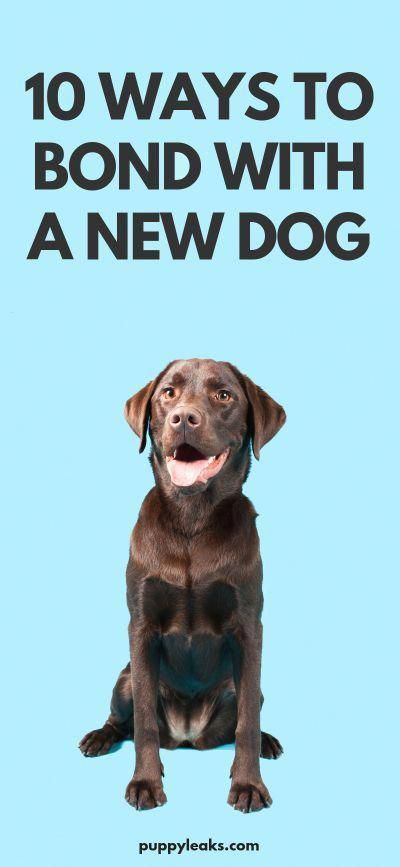 Motivating Forecasted Dog Training How To Buy Now Pay Later