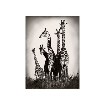 Chelsea Art Studio African Animals Series Giraffe C Graphic Art Print Format Outdoor Uv Water Resis Hand Painting Art Chelsea Art Studio Graphic Art Print