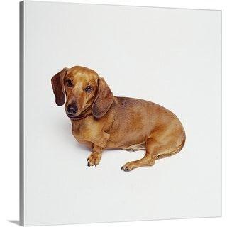 Dachshund Dog Lying Down Canvas Wall Art Dachshund Dog