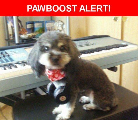 Please spread the word! Kaydo was last seen in Renton, WA