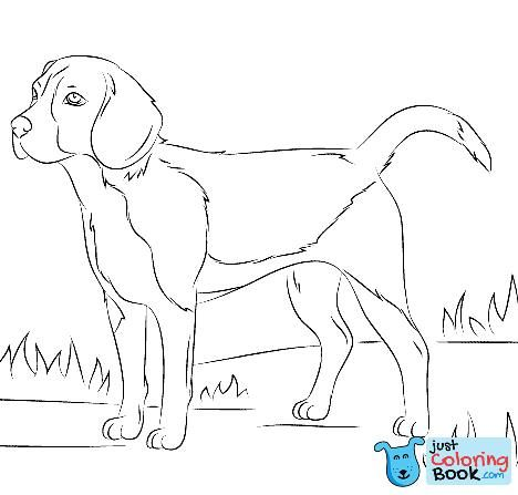 Beagle Dog Coloring Page Free Printable Coloring Pages In Funny