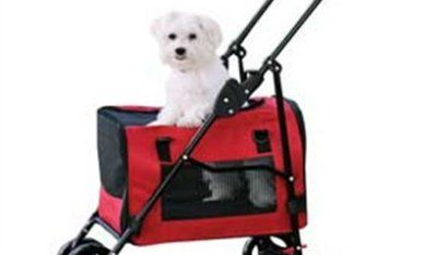 The Best Dog Food For Maltese Maltese Dogs Dog Supplies Dogs