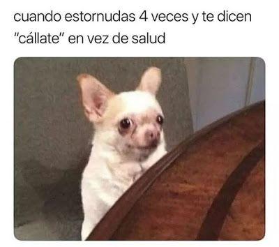 Whatveo Por Donde Comenzare A Morder Memes Divertidos Memes Graciosos Memes