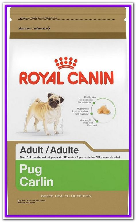 Best Food For Small Dogs Uk The United Kingdom Is Home To Some
