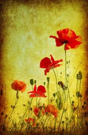 Photo Of A Poppies Pasted On A Grunge Background Poppy Flower Floral Throw Blanket Poppies