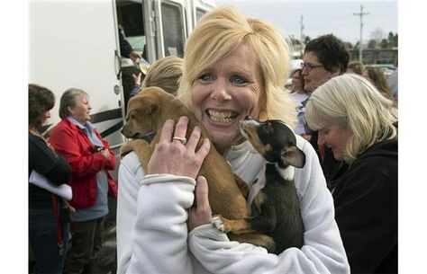 Homeless Dogs Arrive In Halifax After Eight Day Rv Road Trip From